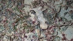 Black sea urchin (Temnopleurus toreumaticus) (wildsingapore) Tags: changi carpark7 echinodermata temnopleurus toreumaticus mollusca bivalvia malleus echinoidea island singapore marine intertidal shore seashore marinelife nature wildlife underwater wildsingapore