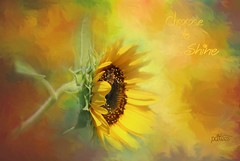 Choose to Shine...(Explored) (Patlees) Tags: sunflower textured dt flower 2018 nc bee explore frontpage 8