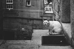 The circumspect cat (RuiFAFerreira) Tags: beauty bw blackwhite white shadow light street mood monochromat monochrome portugal porto canon ef50mmf18ii