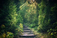 There's magic in this forest (Fr@nk ) Tags: forest green nature path hiking walking travel wet slippery europe germany frnk mrtungsten62 krumpaaf canon ortonfx dream dreamy rec0309 rec2609