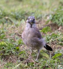 IMG_8994 (Mal.Durbin Photography) Tags: forestfarm maldurbin wildlifephotography wildlife naturephotography naturereserve nature animals birds