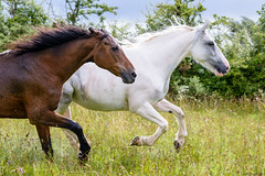 20180806-2018-08-11 001 096.jpg (karld2007) Tags: d7100 nikon 1750mm horse horses ireland eire