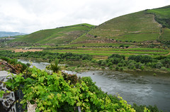 DOU_Quinta_de_Maraccos_22 (chiang_benjamin) Tags: dourovalley portugal vineyard quintademaraccos portwine river grape vines greenhill mountains