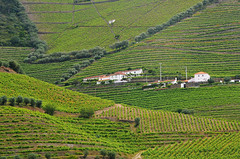 DOU_Quinta_de_Maraccos_view_04 (chiang_benjamin) Tags: dourovalley portugal vineyard port wine greenhill mountain