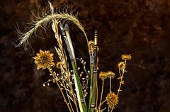 Desert Bouquet (docoverachiever) Tags: stilllife plant arrangement reeds dried bouquet