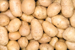Fresh organic potato stand out among many large background potatos in the market