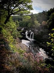 Rogie Falls (smackenzie77) Tags: rogiefalls waterfall river stream scotland highlands trees ferns powerful