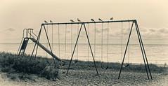 The Morning Crowd:  Seagulls at Fox Park (J Henry G) Tags: birds gulls seagulls foxpark michigan menomineecounty johnhenrygremmer swingset