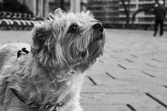 """The Dog • <a style=""""font-size:0.8em;"""" href=""""http://www.flickr.com/photos/66632665@N04/30303748328/"""" target=""""_blank"""">View on Flickr</a>"""