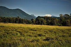 the farm- the mountain (wolf8_us) Tags: travels washingtonstate country randall morton far s trees