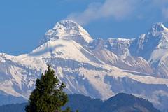 Huge looming Nandadevi west. (draskd) Tags: mtnandadevi nandadevi chaukori himalayanpeak himalayas uttarakhand mountainsnaps bigmountain famouspeaksofhimalayas kmvnchaukori