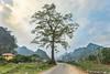 _MG_3383.0410.QL3.Hạnh Phúc.Quảng Uyên.Cao Bằng (hoanglongphoto) Tags: asia asian vietnam northvietnam northeastvietnam landscape scenery vietnamlandscape vietnamscenery vietnamscene tree sky cloud road mountain mountains village caobanglandscape homes house canon canoneos5dmarkii canonef1635mmf25liiusm đôngbắc caobằng quảnguyên hạnhphúc ql3 phongcảnh bảnlàng nhữngngôinhà conđường cây bầutrời mây