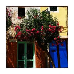 Vini&Paninis (Jean-Louis DUMAS) Tags: tree flowers fleurs arbre blue bleu yellow jaune colors couleurs smartphone iphone