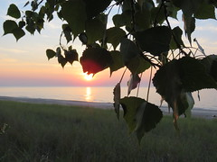 Trees at sunset, Indiana (Rque) Tags: indiana tree sky water lakemichigan shore