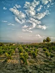 D. O. Rioja (Martika64) Tags: paisaje landscape paisajerural rurallandscape campo countryside field escenarural ruralscene tierracultivada cultivateland viña vineyard cielo sky skyscape nubes clouds cloudscape atardecer sunset color imagenacolor colorimage espacioabierto outdoor