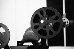"""Go to bed now I can tell... Pain is on the way out now..."" (morsini1) Tags: leicam6classic085 summicrondr50mmf2 fujineopanacros100 35mmfilm hogar señorcremoso blancoynegro blackwhite thewarondrugs"