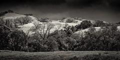 Sunol Hillside in Soft Light   B&W (CDay DaytimeStudios w/1,000,000 views) Tags: california cloudyday eastbay fremontca hill hills hillside instagrampict rainyday sunolpark sunolregionalpark trees winter