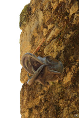 Gargouille (Dirty Papy) Tags: gargouille puy du fou