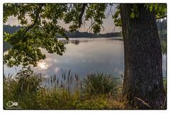 """""""Morgenstund"""" (anton_zach) Tags: teich teichlandschaft sonne sonnenaufgang see waldviertel wasser baum blume blau grün gras wolken natur landschaft licht laub outdoor himmel holz wald"""
