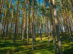 hill (miemo) Tags: eteläsavo europe finland hytermä kerimäki saimaa southernsavonia day em5mkii forest hill landscape olympus olympus1240mmf28 omd pines summer sunlight travel trees savonlinna fi