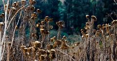 Limache Inside (Club Vortex) Tags: limache canon chile canont5 chilean nature naturaleza niño wild wildlife world leaf autumn sun quillota quintaregion