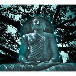 Lord Buddha statue under the Bodhi Tree-Seema Malaka,Colombo,Srilanka thumbnail