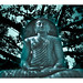 Lord Buddha statue under the Bodhi Tree-Seema Malaka,Colombo,Srilanka