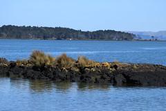 IMG_9213 (christineNZ2017) Tags: ambury regional park amburypark birdsanctuary birdlife bird sanctuary southauckland auckland newzealand winter