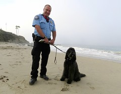 """""""NOT the best day ever!""""   by Benni Girl (Bennilover) Tags: dogs outlaws lagunabeach officer busted labradoodle bennigirl benni complainers 52weeksfordogs nozoomies august laws smokey"""