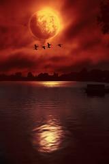 blood moon (Plattner Rene´) Tags: welt wasser see ruhe träumerei stille zauberei zauber universum abend sonne dreamwold fantasie himmel landschaft licht beautiful outdoor sonnenuntergang sand baum wald gras holz feld wolke landstrase