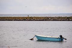 DSC02066-1 (alavrsen) Tags: hirsholmene denmark island nature sanctuary protedted sea seascape stones landscape rocks birds wildlife wildnature vegetation boat frederikshavn