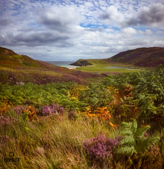 Heather and Bracken (Impact Imagz) Tags: northtolsta garrybeach traighgheiradha isleoflewis westernisles outerhebrides hebrides hebrideanlandscapes hebridean scotland moorland bracken heather autumn fdlens canon