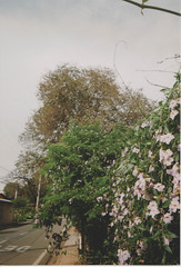 015.jpg (Tai Moura) Tags: kodak film filme 35mm proimage 100 trip100r olympus flower flor olympustrip100r lomo lomography lomografia
