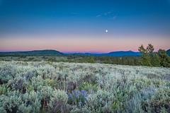 Rising Moon Over the Teton Prairie (grimeshome) Tags: moon sunset fullmoon grandtetonnationalpark prairie flowers purpleflower tetons dusk woods wilderness nature davidgrimesphotography davidgrimesphotographer