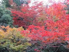 a (46) (hiromi89) Tags: japan beauty beautiful scenery flower wood pond
