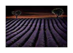 一帘幽梦 (Slow's) Tags: 一帘幽梦 lavande lavender valensole chinoises