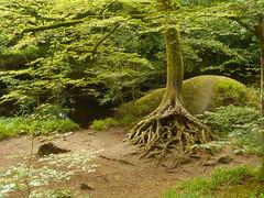 DSCN5595 (norwin_galdiar) Tags: bretagne brittany breizh finistere monts darrée nature landscape paysage
