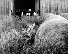 Rolling in the hay (Brian Copeland Photography) Tags: stillcamera selfdeveloped rodenstocksironarcopal1210mmf56 outdoor rural 4x5 film omega45d exterior photogear orangefilter barn afternoon viewcamera filter blackandwhitefilm largeformat kodak farm kodakhc110 blackandwhite dilutionb kodaktmax100 copal1 copalno1 kodakfilm omega rodenstock sironar toyo bw blackwhite daytime lensfilter midday monochrome noon hagersville ontario canada ca