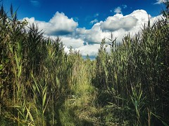 Into the swamp  #Lithuania #nature #summer #natural #wild #environment #swamp #green #sky #clouds #bluesky #travel #traveling #visiting #visitlithuania #amazing #mobilephotography #mobilephoto #outdoor #photography #samsung #s7edge (Zilvinas Degutis) Tags: sky visitlithuania green visiting natural nature bluesky traveling clouds mobilephoto swamp summer outdoor amazing environment mobilephotography samsung s7edge lithuania travel wild photography