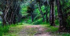 Bosque Urbano (Club Vortex) Tags: forest bosque viñadelmar valparaiso vida wild world green tree canon chile canont5 chilean wood ways
