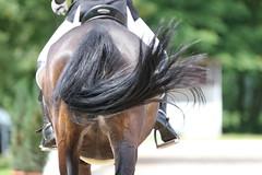 _MG_8400 (dreiwn) Tags: dressurprüfung dressurreiten dressurpferd ridingarena reitturnier reiten reitplatz reitverein reitsport ridingclub equestrian horse horseback horseriding horseshow pferdesport pferd pony pferde tamronsp70200f28divcusd dressur dressuur dressyr dressage
