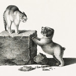 Illustration of a domestic cat and a playful puppy by Gottfried Mind (1768-1814). Original from Library of Congress. Digitally enhanced by rawpixel. thumbnail