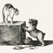 Illustration of a domestic cat and a playful puppy by Gottfried Mind (1768-1814). Original from Library of Congress. Digitally enhanced by rawpixel.