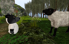 Wolf in Sheepz Clothing (Teal Freenote) Tags: tealfreenote wolfhartnell sl secondlife tiny tinies virtualworld