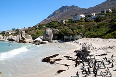 Bulders Beach (-LoraN-) Tags: pingouin plage afrique sud paysage nature canon océan couleur