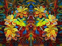 Transition (Rollingstone1) Tags: transition leaf leaves plant plants nature colour vivid music song change summer autumn flora colourful art artwork geometric painting artdigital