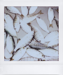 I don't eat fish (ale2000) Tags: instax instant lomoinstantsquare instaxsquare lomoinstant fuji lomography fujifilminstaxsquare square analog analogue grey grigio fish fishes pesce pesci deadanimals