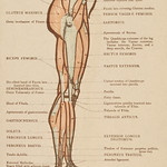 Vintage illustration of lower limb published in 1899 by James M Dunlop thumbnail