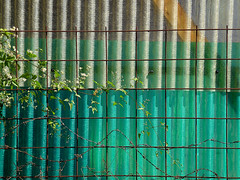 The end justifies the means (vavan) Tags: abstractphotography abstract wall green