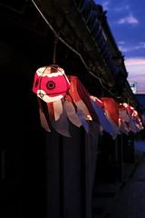 20180814_3375柳井 (Gansan00) Tags: fujifilm xt2 fujifilmxseries japan yamaguchi ブラリ旅 駅 日本 snaps summer 8月 yanai 柳井 金魚提灯 xf1855